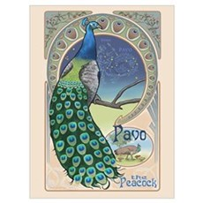 Pavo the Peacock Poster