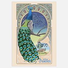 Pavo the Peacock