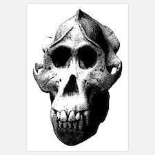 Orang Utan Skull