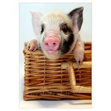 Unique Little pig farm Wall Art