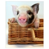 Pig Framed Prints
