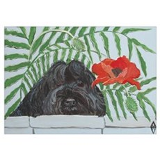 """""""Portuguese Water Dog"""" Poster"""