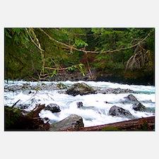 Nooksack River Trail