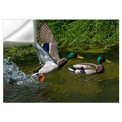 Mallard Take-off Wall Decal