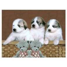 Great Pyr Puppy Trio<br> Poster