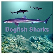 Dogfish Sharks Poster