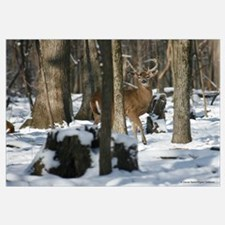 Deer 2842-016