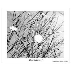 Dandelion 1 Poster