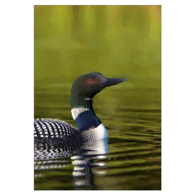 LOON Canvas Art