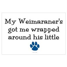 Wrapped Around His Paw (Weimaraner) Poster
