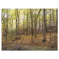 Fall Colors Hueston Woods State Park near Oxford Poster