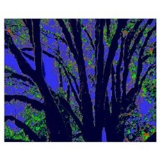 Black Tree Branches Poster