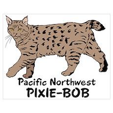Pixie-Bob (color) Poster