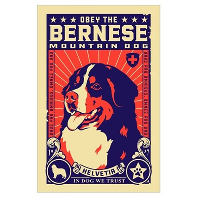 Bernese Mountain Dog! Poster