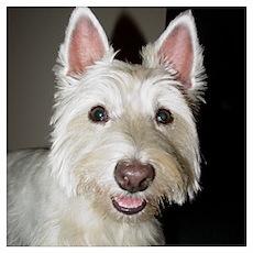 Westie Pup Poster