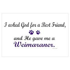 God Gave Me A Weimaraner Poster