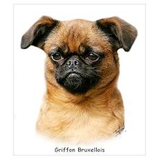 Griffon Bruxellois 9Y406D-129 Poster