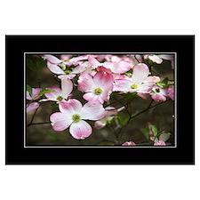 Pink Dogwood 18x24