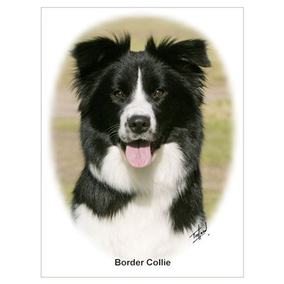 Border Collie 9Y411D-009 Poster