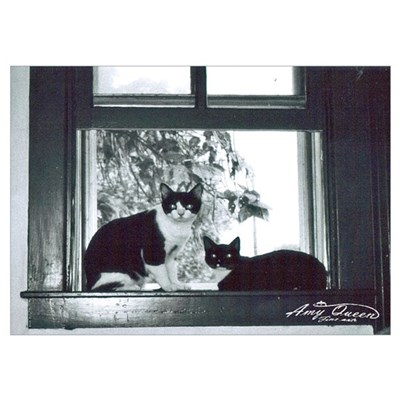 Two cat window Poster