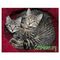 Cats Haven Rescue 618 Poster