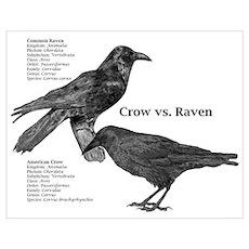 Crow vs. Raven Poster