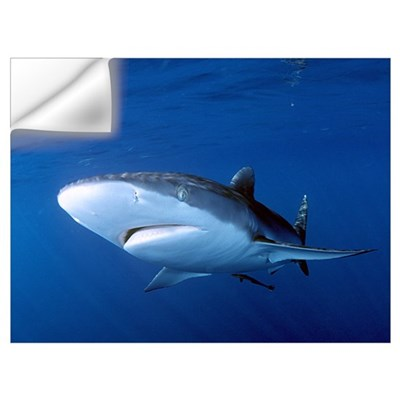 Silky shark Wall Decal