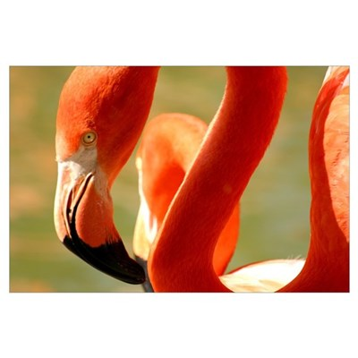 Flamingo Flair Poster