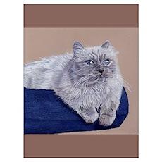 Himalayan Cat Poster