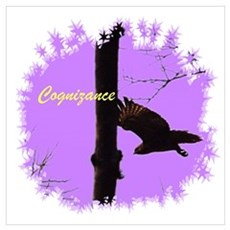 Cognizance Hawk Photography Poster