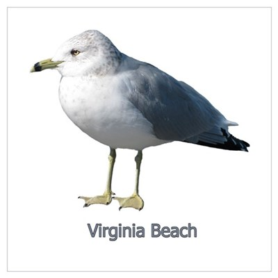 Virginia Beach Gull Poster