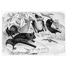 Daubenton's Bat Poster