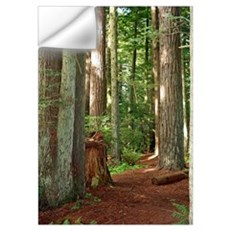 A view in the redwoods I Wall Decal