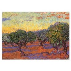 Van Gogh Olive Grove Poster