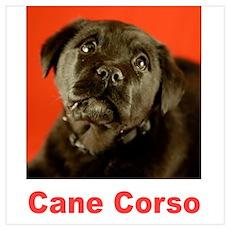 """""""Cane Corso"""" Poster"""