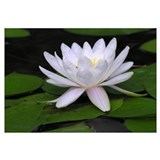 Water lily Wrapped Canvas Art
