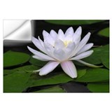Water lily Wall Decals
