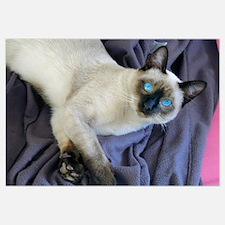 - Sam, the Siamese cat