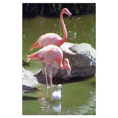 Growing Up Flamingo Poster
