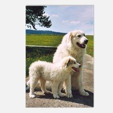 """Great Pyrenees Postcards (P.of 8)""""Big Daddy"""""""