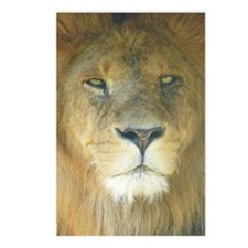 Lion Postcards (Package of 8)