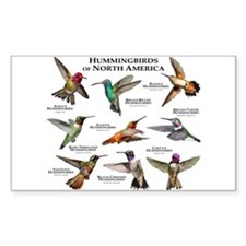 Hummingbirds of North America Decal