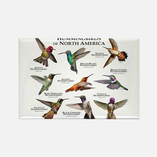 Hummingbirds of North America Rectangle Magnet