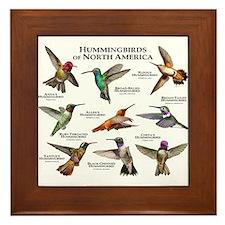 Hummingbirds of North America Framed Tile