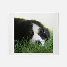 Bernese Puppy Throw Blanket