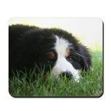 Bernese Mouse Pads