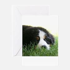 Bernese Puppy Greeting Card