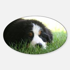Bernese Puppy Decal
