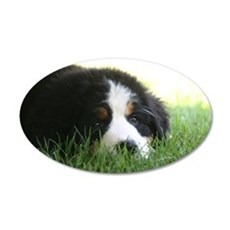 Bernese Puppy Wall Decal