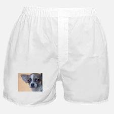 Artsy Dog Boxer Shorts